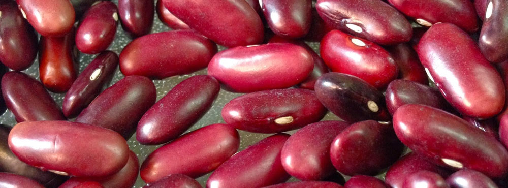 Rajma (Red Kidney Beans)